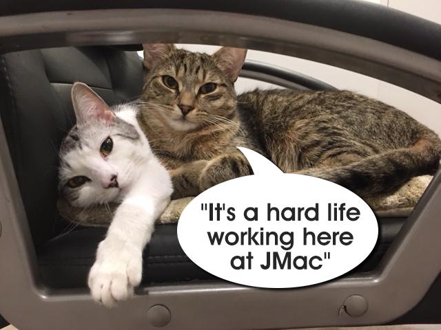Cats at JMacs Office